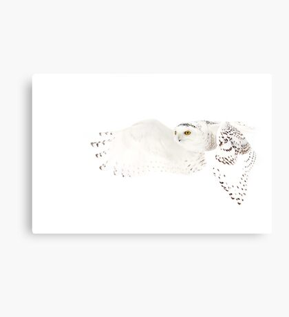 He went that away - Snowy Owl Canvas Print