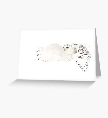 He went that away - Snowy Owl Greeting Card