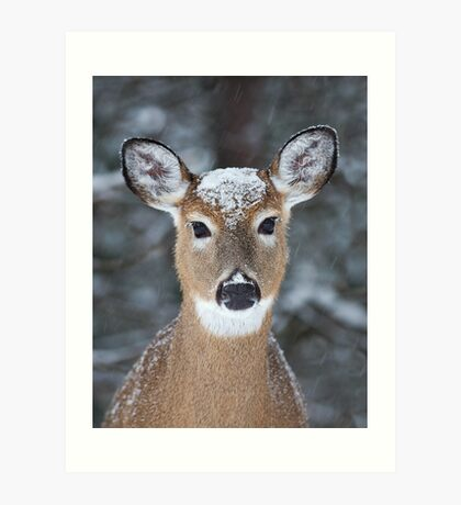 New Winter hat - White-tailed deer Art Print
