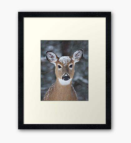New Winter hat - White-tailed deer Framed Print