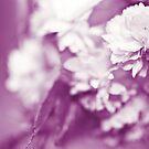 Pink haze by Lissywitch