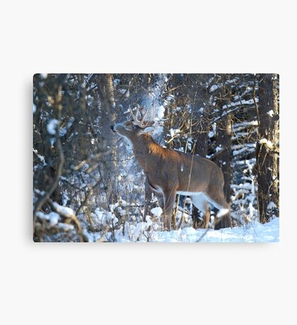 Snow Shower - White-tailed Buck Canvas Print