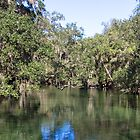 Trees and Water at Blue Springs by ValeriesGallery