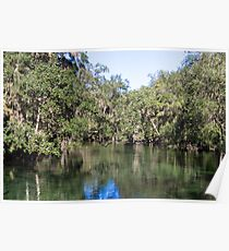 Trees and Water at Blue Springs Poster
