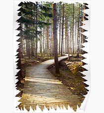 Silent forest fresh air Poster