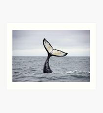 Waving Whale's Tail Art Print