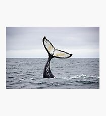 Waving Whale's Tail Photographic Print