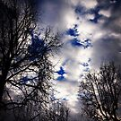 Winter Sky - January 2017 by Douglas E.  Welch