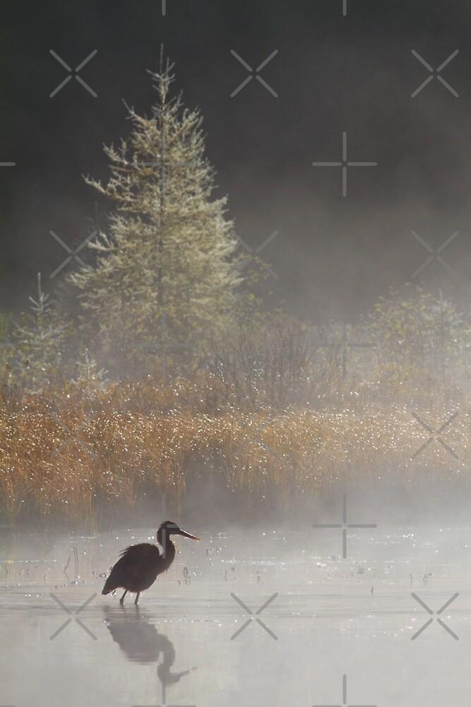Morning Solitude - Blue Heron by Jim Cumming