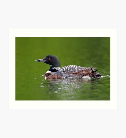 By her side - Common loon Art Print
