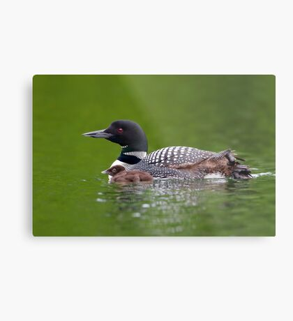 By her side - Common loon Metal Print