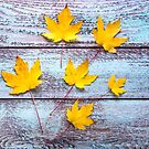 Yellow leaves by Zoe Power