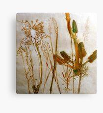 Mornington Peninsula Grasslands 2 Canvas Print