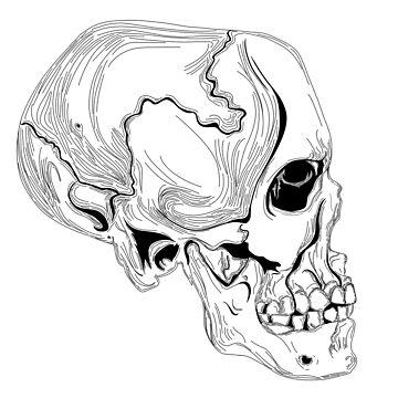 Skull Contour by TheAnonOne