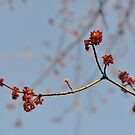 Spring Promise by Jola Martysz
