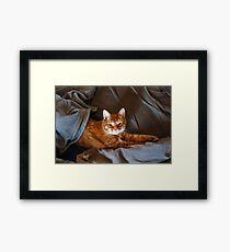 Cute Lazy Red Cat Framed Print