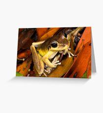 Stoney Creek Frog Greeting Card