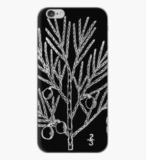 Britton And Brown Illustrated flora of the northern states and Canada 0876 Juniperus horizontalis iPhone Case
