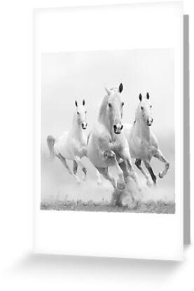 horses by marusya1