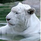 White tiger cooling off in water by Martyn Franklin
