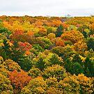 Autumn splendor by Daniel Sorine