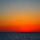 Seagull After Glow by Zzenco