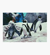 Penguins On The Rocks Photographic Print