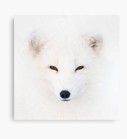 Polar Fox Canvas Print