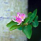 Honey Suckle Blossoms - Digital Oil  by Sandra Foster