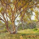 Wheelers Hut, Jagungal Wilderness, Kosciuszko, New South Wales, Australia by Michael Boniwell