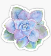 Water color succulent Sticker