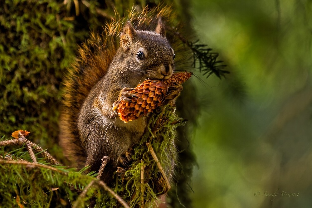 HUNGRY SQUIRREL by Sandy Hill