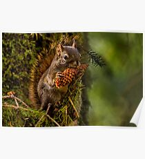 HUNGRY SQUIRREL Poster