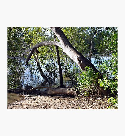 Mangroves Photographic Print