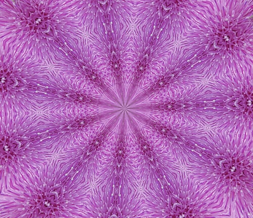 Thistle Flower by HilaryFran