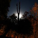 Moon behind Tree by bassdmk
