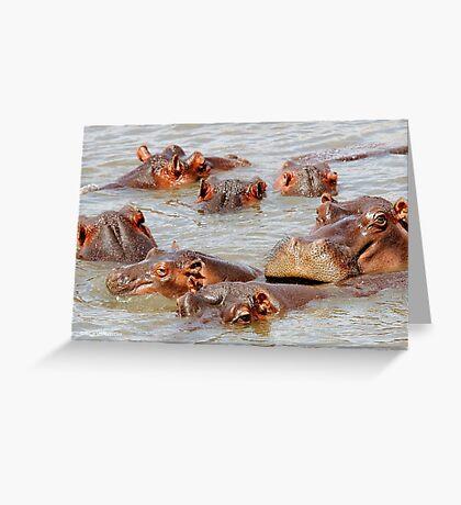A FAMILY GATHERING - *Hippopotamus amphibious* Greeting Card