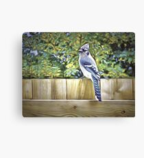 King Of The Blue Jays Canvas Print