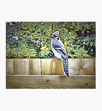 King Of The Blue Jays Photographic Print