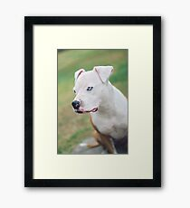 Nobody Can Hurt Me Without My Permission Framed Print