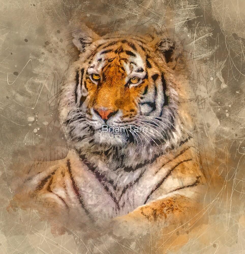 Siberian Tiger by Brian Tarr