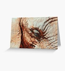 Wild African Elephant Portrait Greeting Card