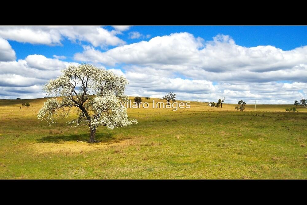 Spring Tree by vilaro Images