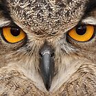 Owl eyes 2 by Gregg Williams