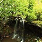 Charleston Falls by kathy s gillentine