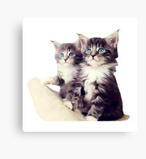 Beautiful Cats Canvas Print
