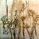 "Australian Grasslands by Belinda ""BillyLee"" NYE (Printmaker)"