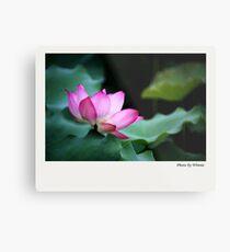 Water Lily by Winnie Metal Print