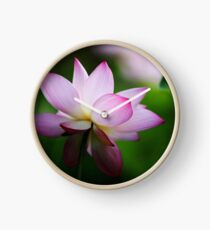 Water Lily by Winnie Clock
