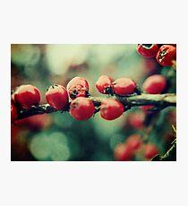 Red Winter Berries Photographic Print
